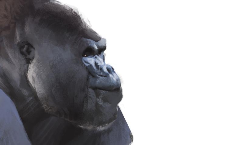 gorilla_Detail